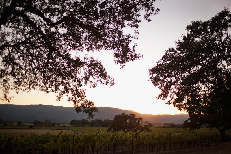 napa california wineries