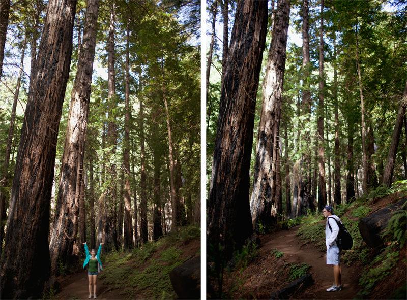 redwood hiking big sur