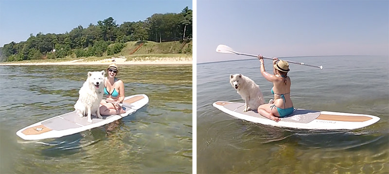 samoyed on paddle board