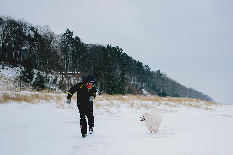 samoyeds snow
