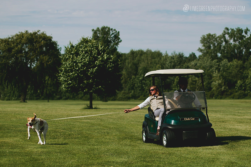 dog golf cart