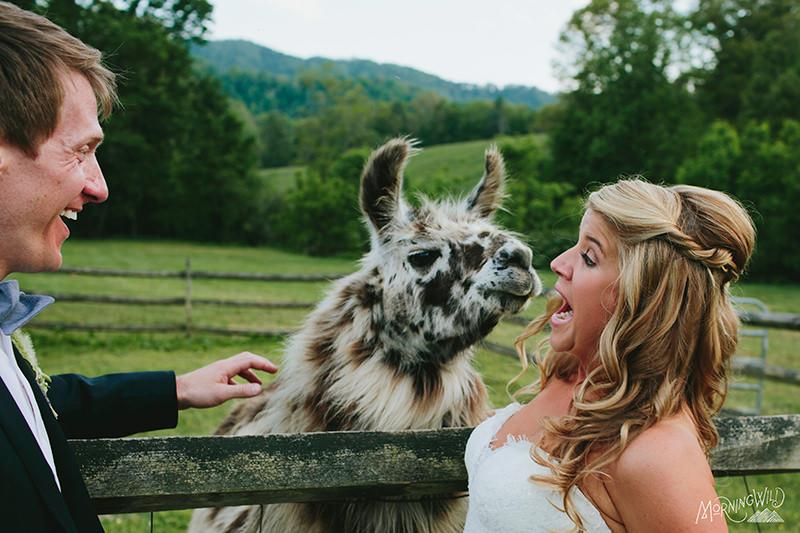 claxton farm wedding photos