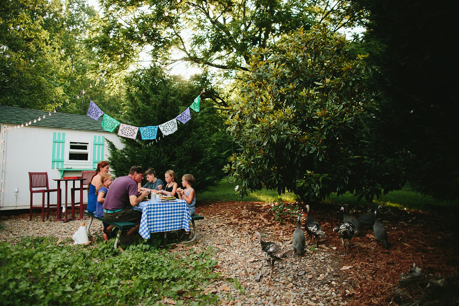 asheville family photos on a farm