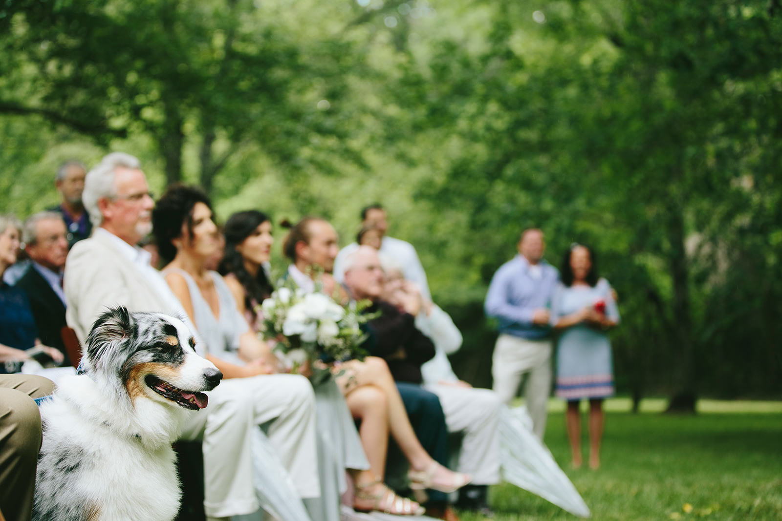 dog in wedding photos
