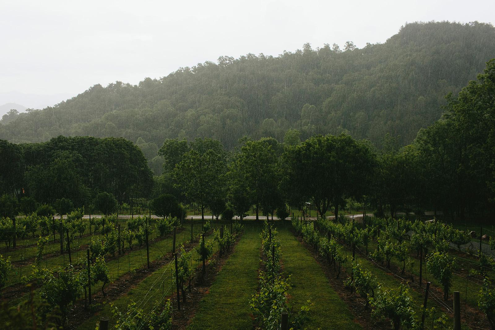 vineyards at bettys creek