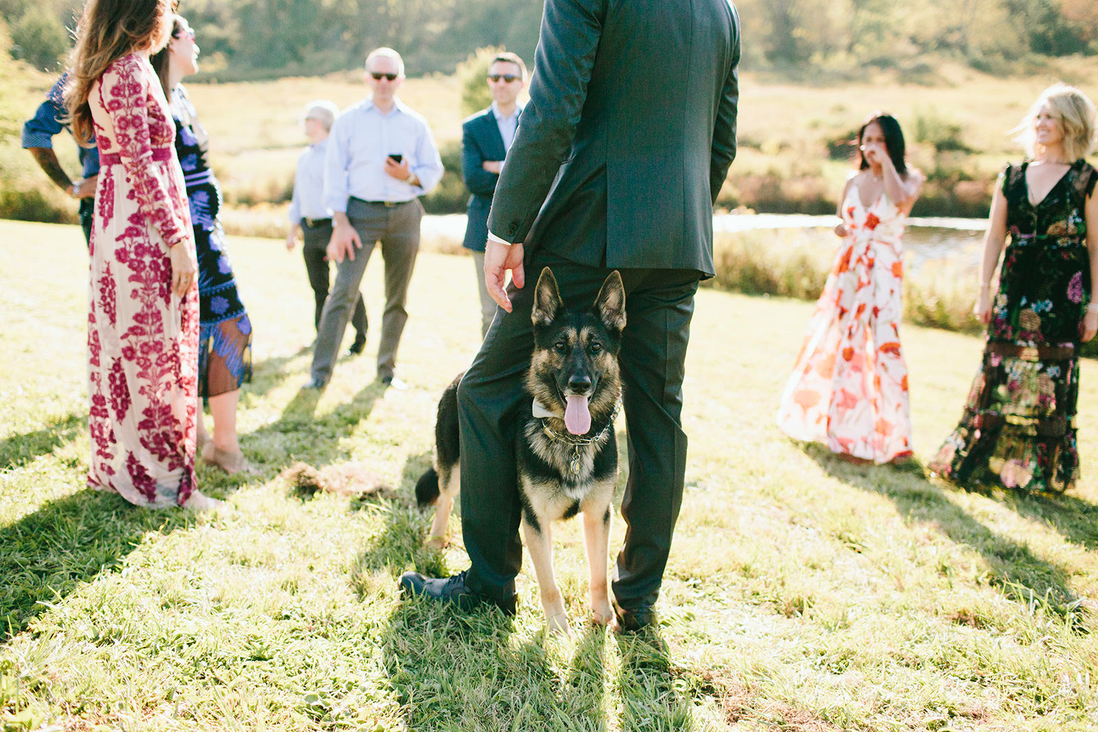 german shepherd wedding photo
