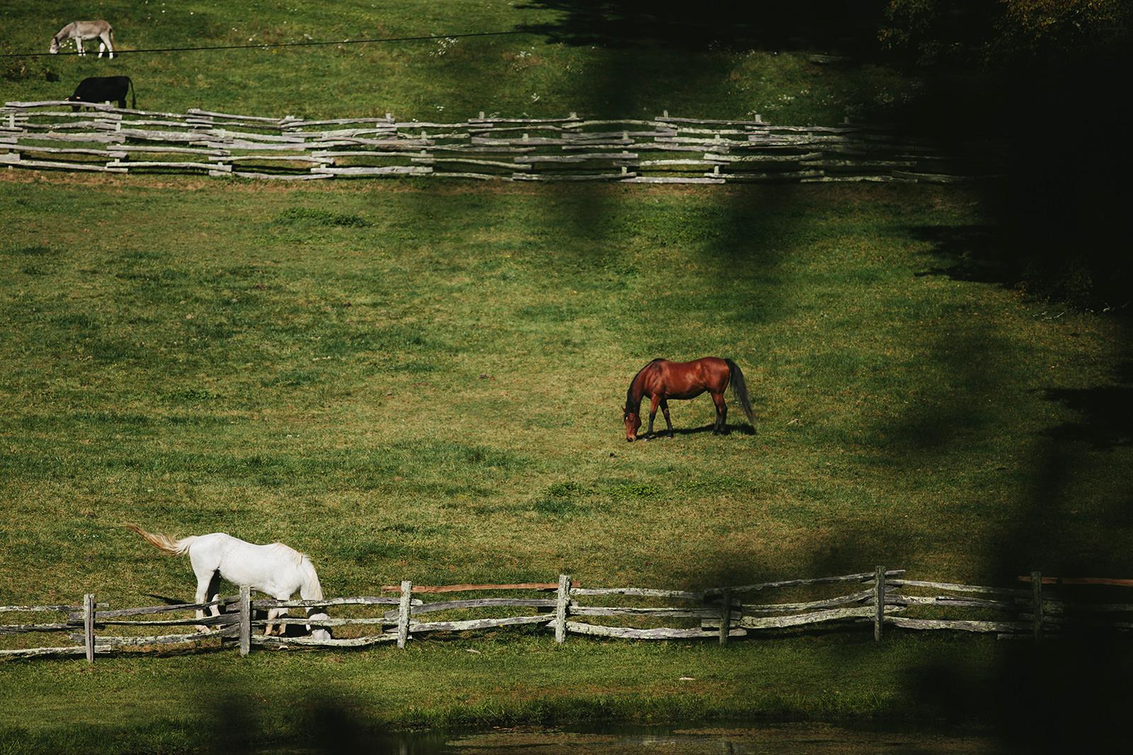 cataloochee ranch photos