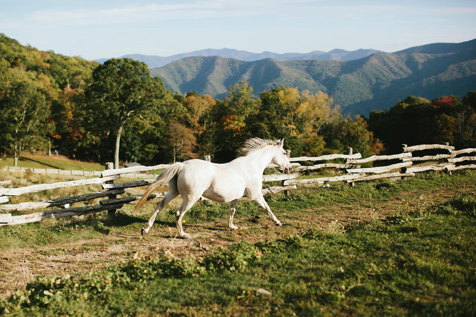 cataloochee ranch horses