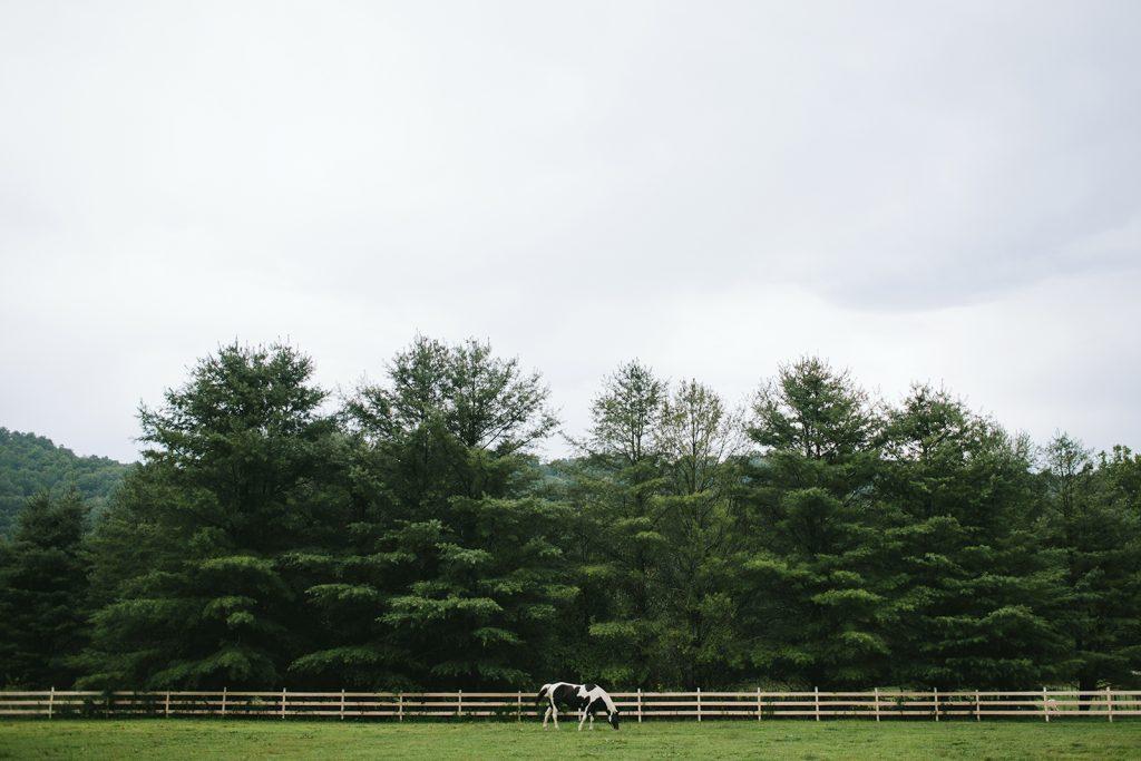 horse-mast-farm