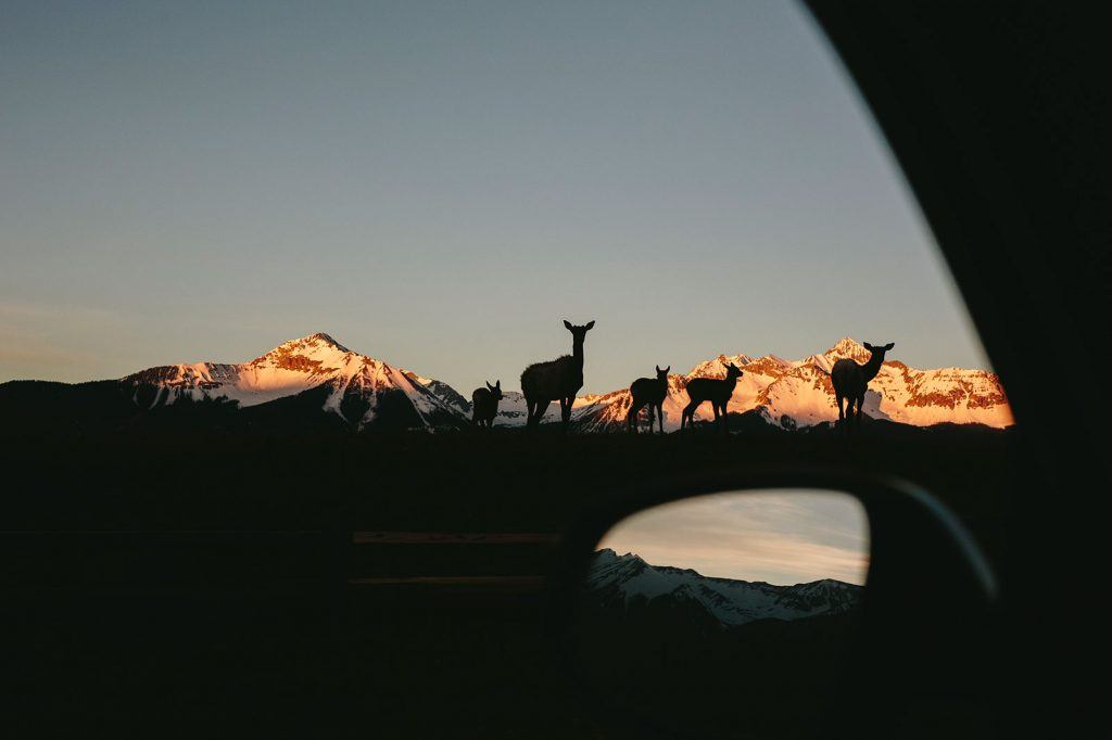 deer at sunrise telluride