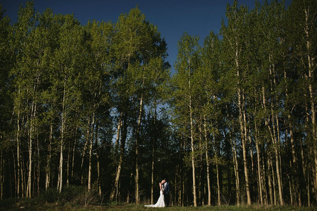 elopement aspen trees